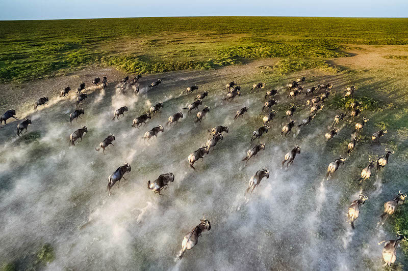 A World Wonder: The Wildebeest Migration in Kenya and Tanzania