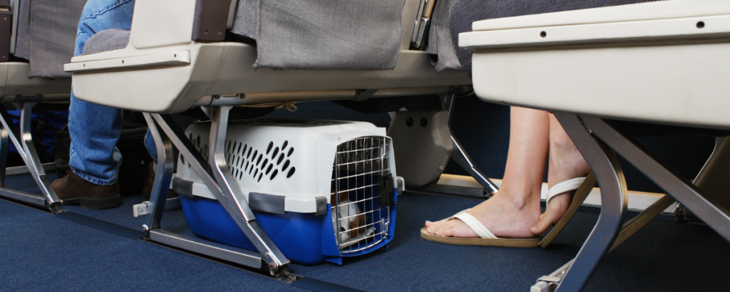 Getting Your Pets Ready for Vacation